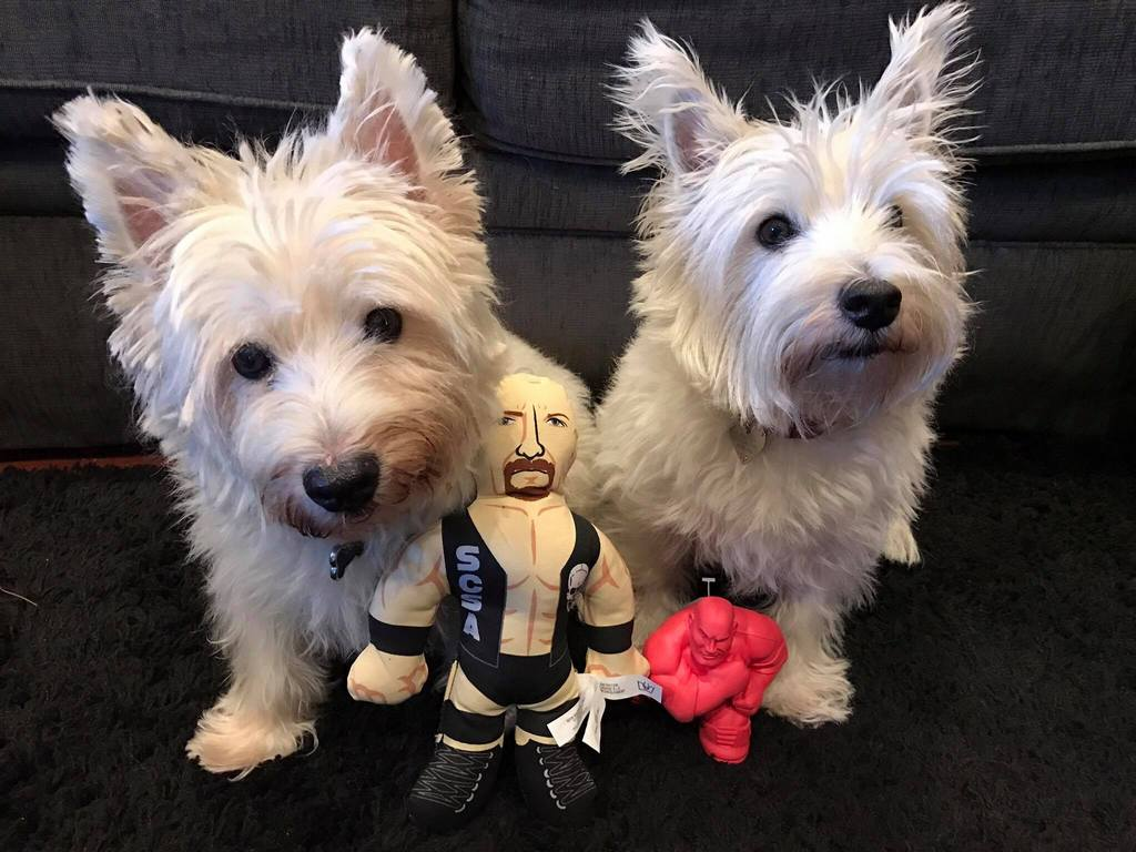 Wwe Pet Product Collection By Petmate Is A Stone Cold